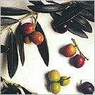 阿爾貝吉納(Arbequina)橄欖果