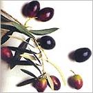 畢夸爾(Picual)橄欖果